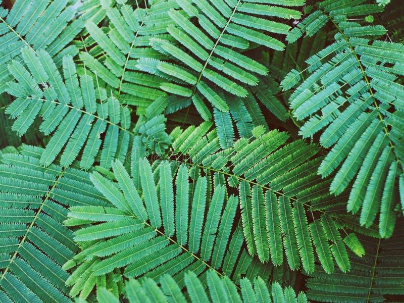 Texture verte de feuille pour le fond, dans le ton foncé photos stock