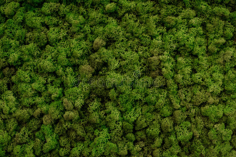Texture verte de fond de mousse belle en nature photo stock