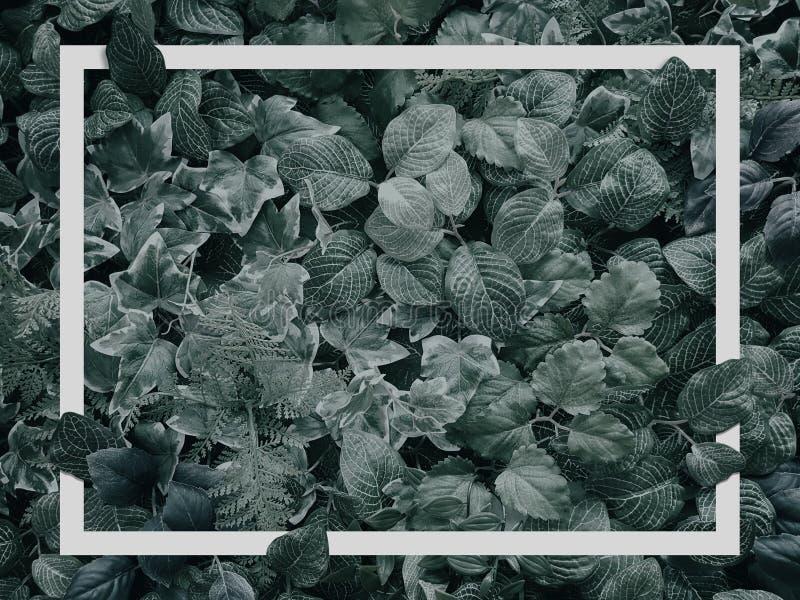 Texture verte tropicale créative de feuille pour l'été tropical avec le cadre blanc de frontière image libre de droits