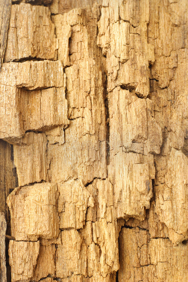 Texture of weathered and cracked wood