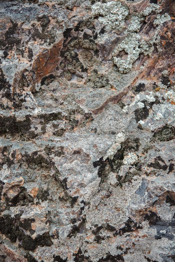 The texture of wet dark brown stone with moss. close-up of rock stock images