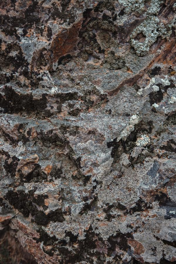 The texture of wet dark brown stone with moss. close-up of rock stock photos