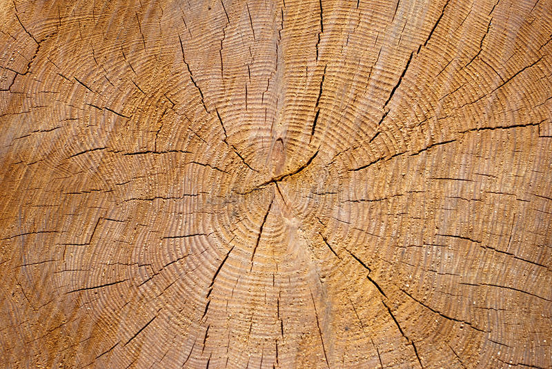 Download Texture of wood stock photo. Image of textured, decayed - 25074712