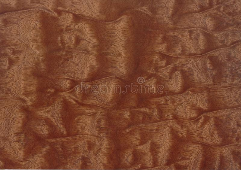 Texture of wood background closeup. royalty free stock image