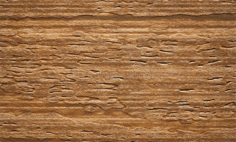 Texture. Wooden texture - wood grain royalty free stock photo