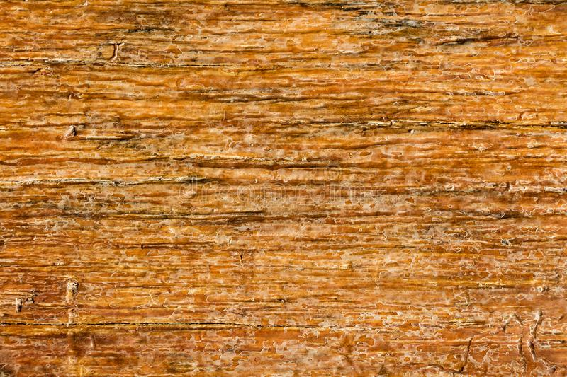 Texture of wooden use as natural. Vintage brown Wood plank for texture or background stock images