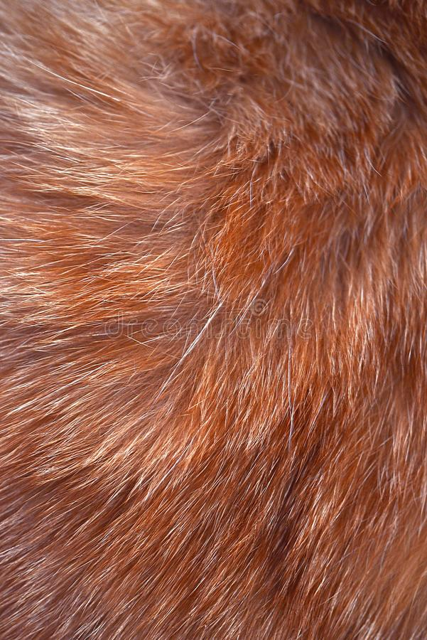 Texture of wool, hair, cat skins, brown stock photography