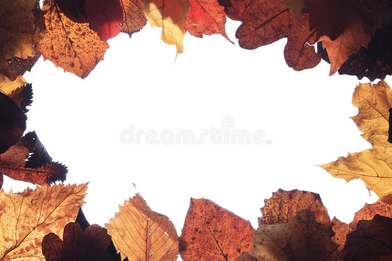 Texture of yellow leaves. Background texture of yellow leaves royalty free stock photography