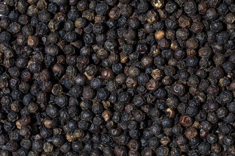 Dry black pepper background. A textured background with black dry pepper spice ingredient peppercorn grain brown high resolution capiscum close up close-up royalty free stock photography