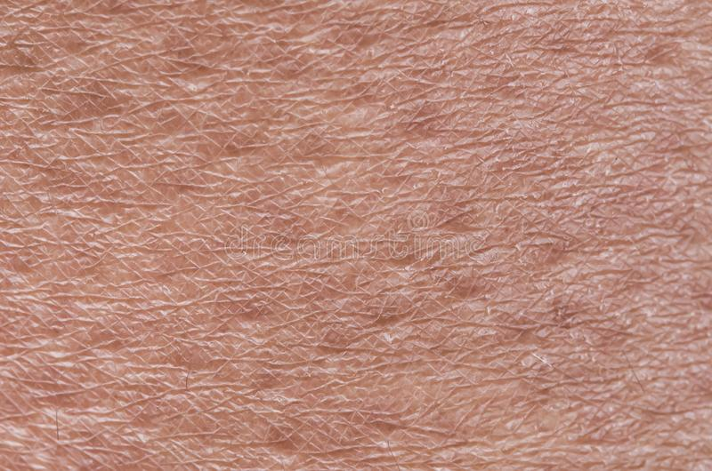 Cosmetological textured background from pink healthy skin of the body brow century close-up, covered with goosebumps and fine royalty free stock photography