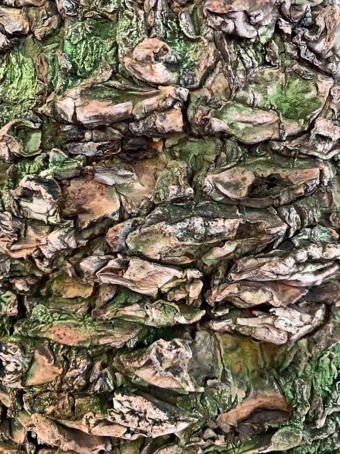 Textured barkentyna drzewko palmowe z zielonym mech fotografia royalty free