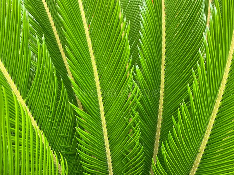 Textured, carved leaves of a beautiful palm tree. royalty free stock photos