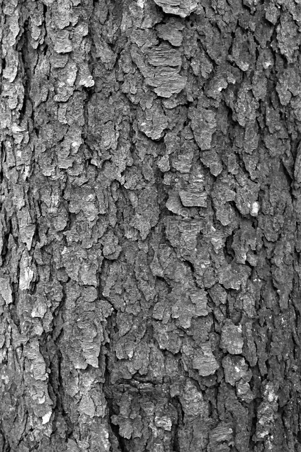 Textured deciduous bark in black and white stock photos