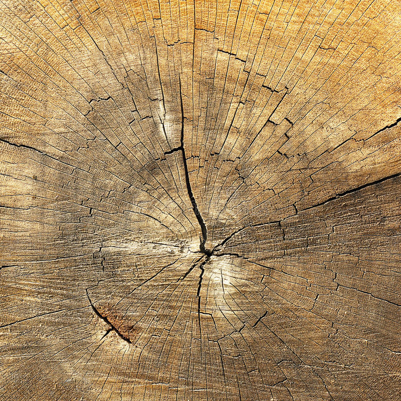 Textured detail of annual rings on wood stock photography
