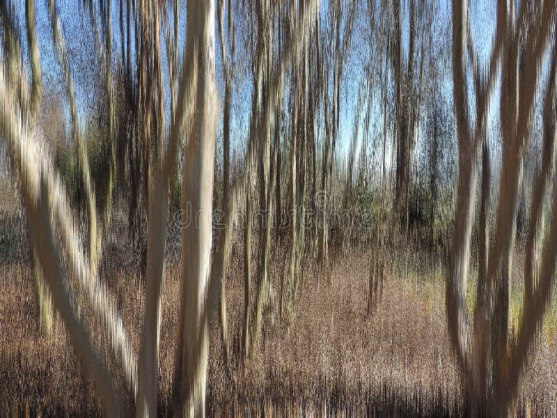 Textured drzewa obraz stock