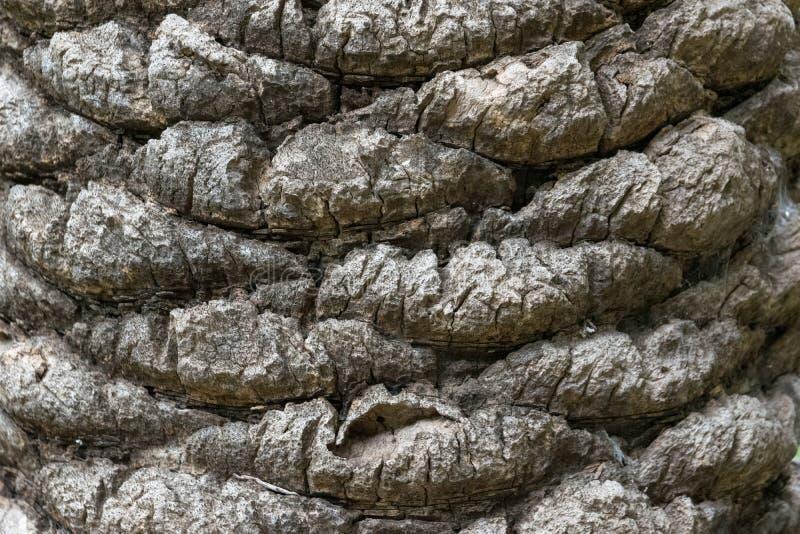 Textured drzewko palmowe barkentyny wzór fotografia stock