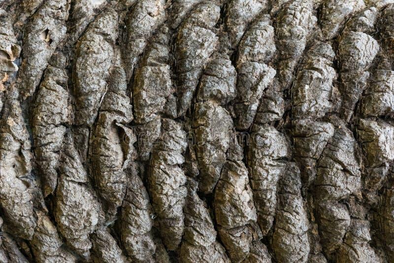 Textured drzewko palmowe barkentyny wz?r zdjęcia stock
