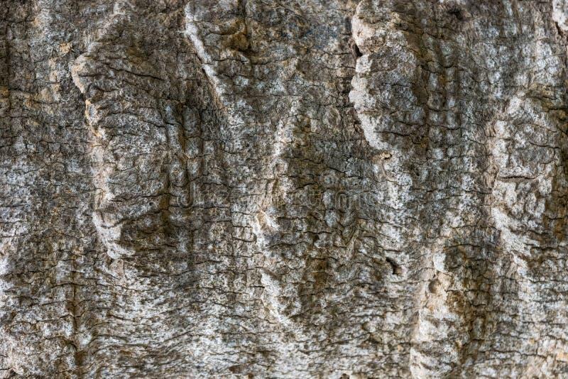 Textured drzewko palmowe barkentyny wz?r obrazy stock