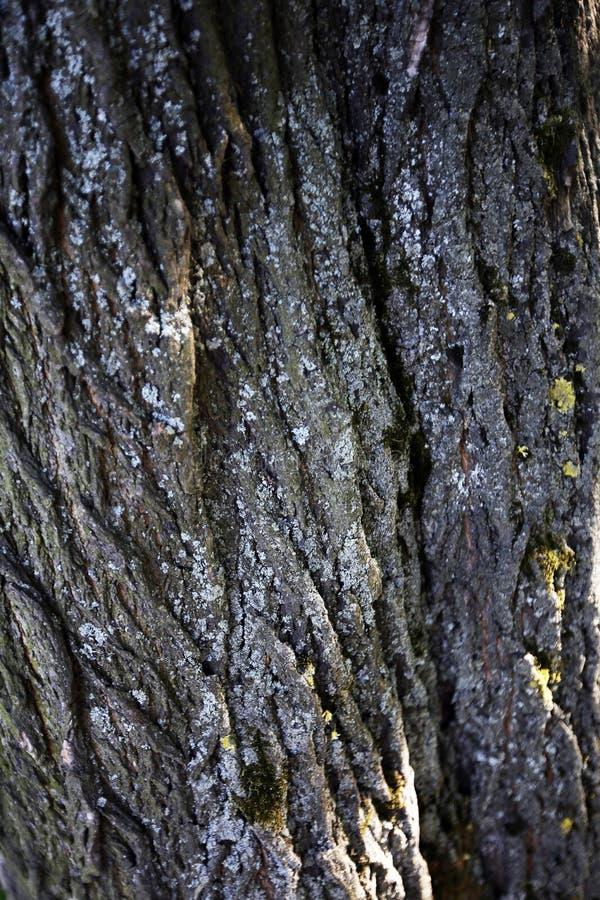 Textured drzewna barkentyna dla spektakularnego t?a zdjęcia royalty free