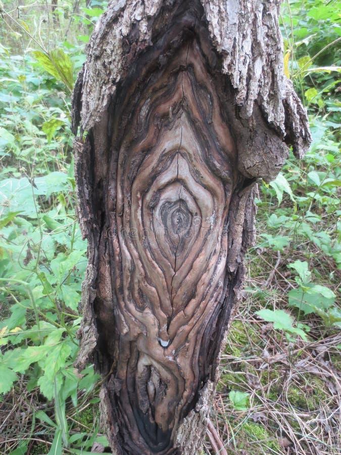 Textured Drzewna deformacja obrazy royalty free