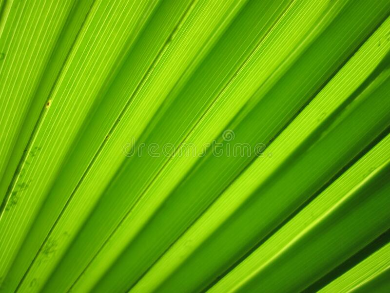 Textured green pattern stock image
