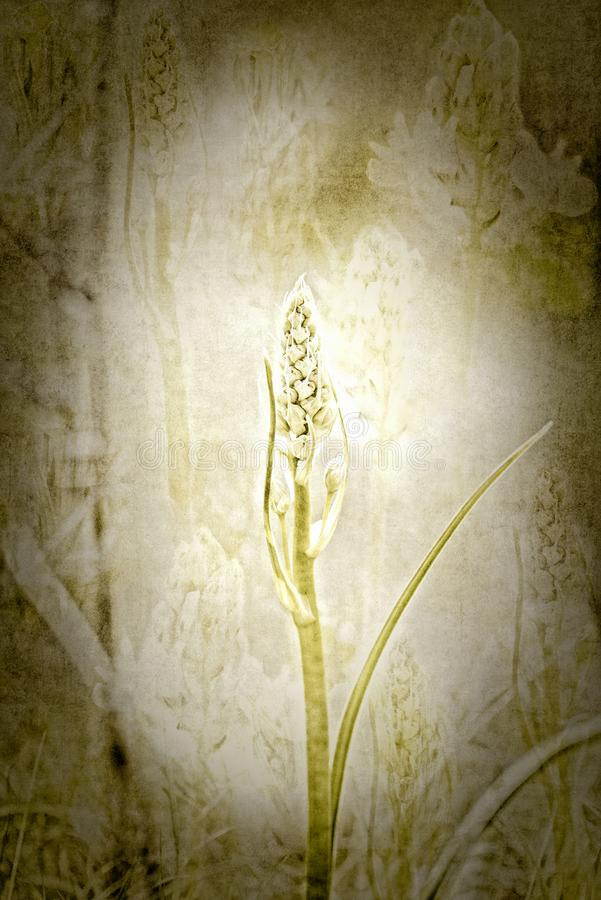 Textured Layered Wildflower Background. Digital Illustration. Textured Wildflower Background. Digital Illustration with Multiple Layers for Backgrounds or royalty free stock images