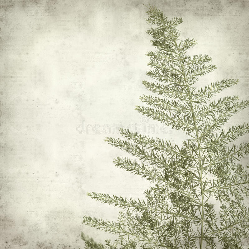 Textured old paper background. With Lace Fern leaf royalty free stock images