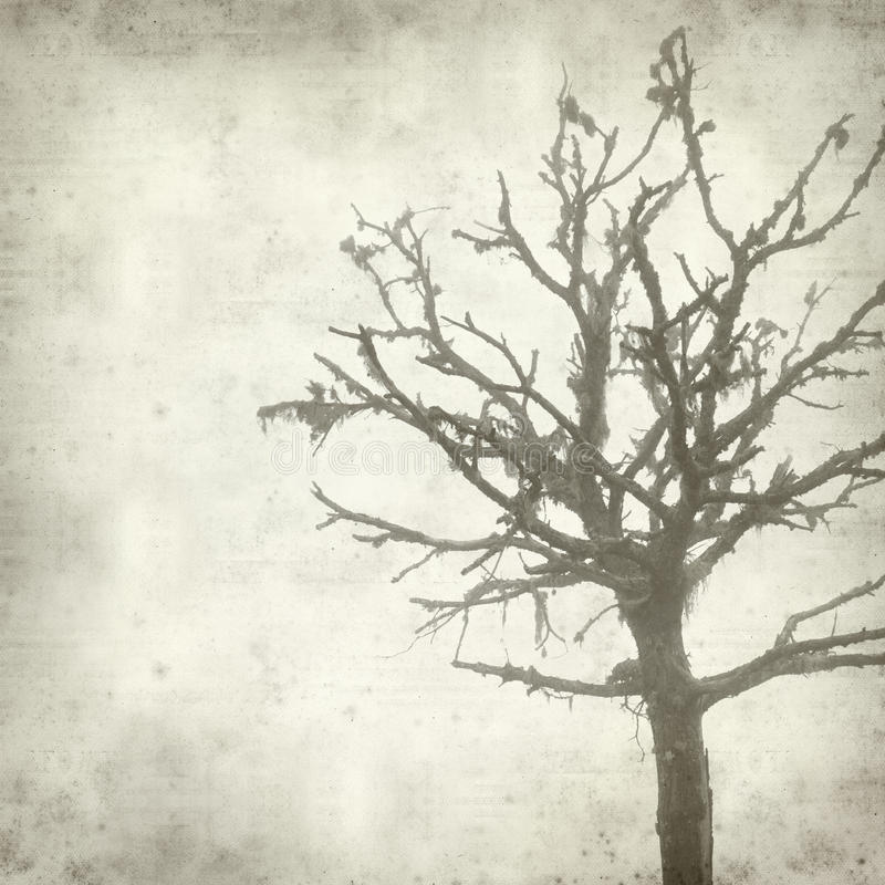 Textured old paper background. With misty dead tree covered in lichen stock photography