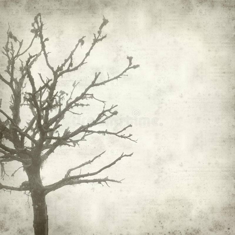 Textured old paper background. With misty dead tree covered in lichen royalty free stock images