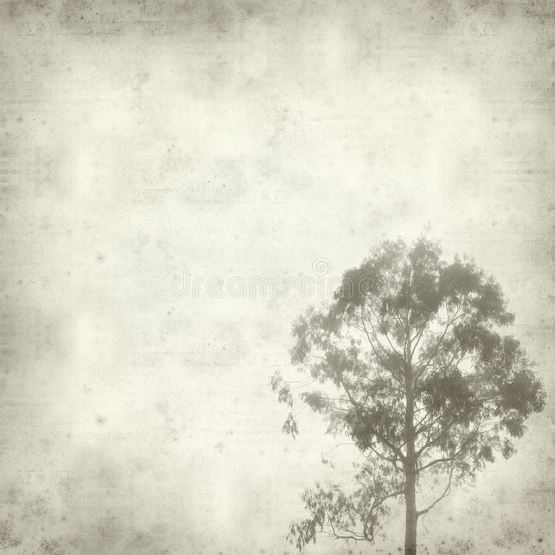 Textured old paper background. With misty eucalyptus tree stock photo