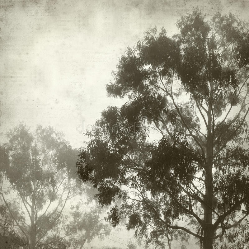 Textured old paper background. With misty eucalyptus tree royalty free stock photos