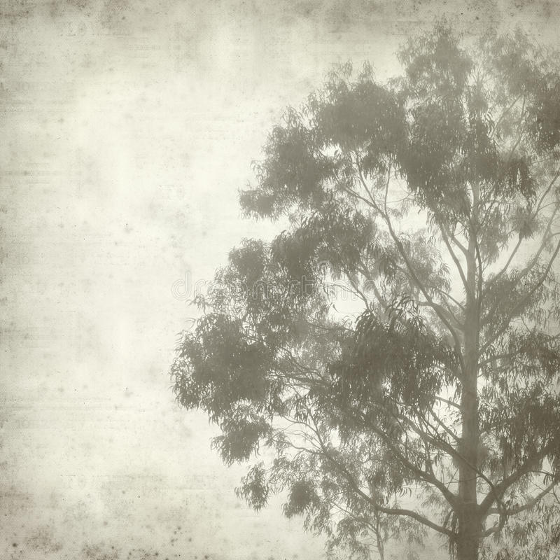 Textured old paper background. With misty eucalyptus tree stock images