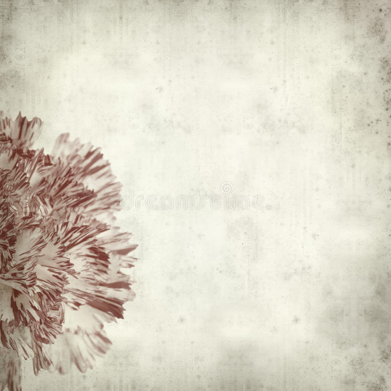 Textured old paper background. With white and red carnation flower royalty free stock photography
