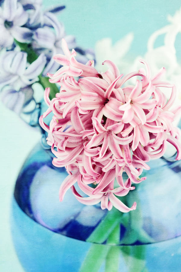 Download Textured Pink Hyacinth stock image. Image of photo, blooming - 23398861