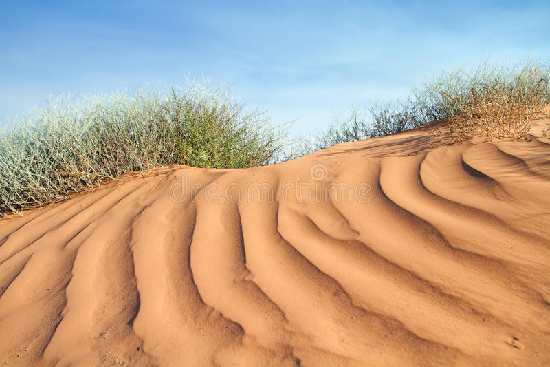 Download Textured pink sand dune stock photo. Image of summer - 15091596
