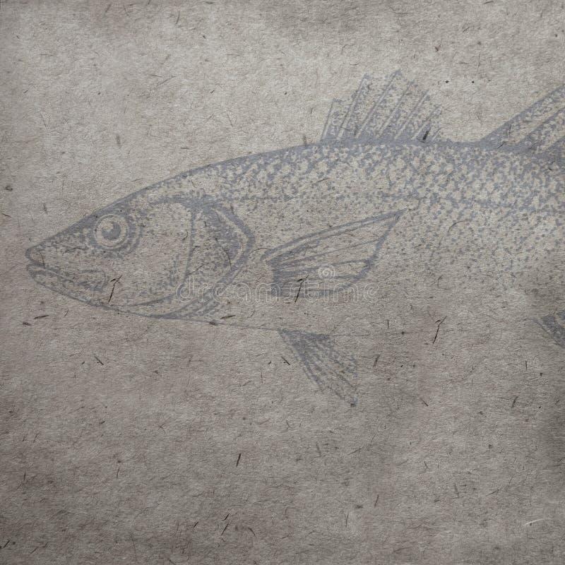 Textured stary papierowy tło z akwareli ryba konturami fotografia royalty free