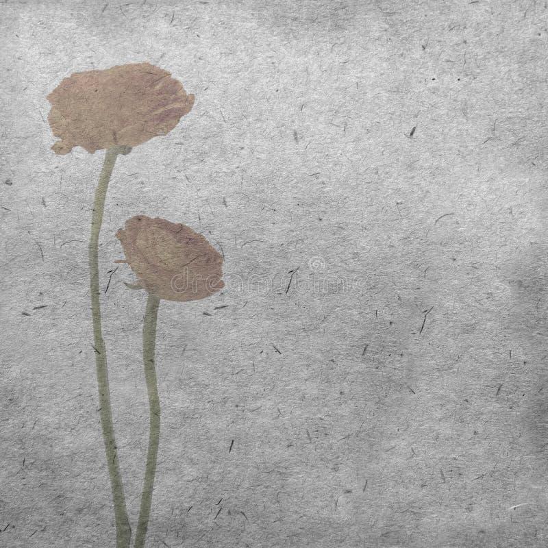 Textured stary papierowy tło z bladym pomarańczowym ranunculus, perski jaskier fotografia stock