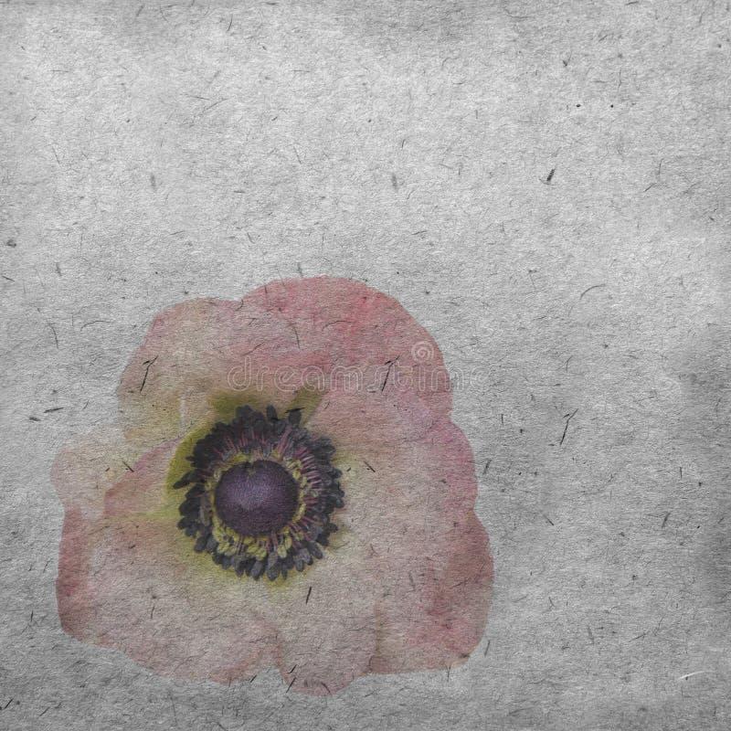 Textured stary papierowy tło z jasnoróżowym anemonem obraz royalty free
