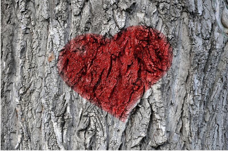 Textured tree bark close-up with a red heart pattern. Love concept. Valentine`s Day stock images