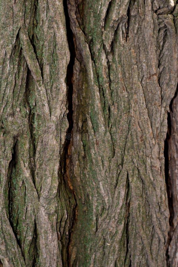 Textured tree bark with deep cracks.  royalty free stock photography