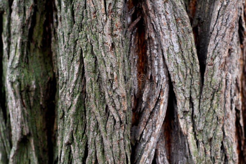 Textured tree bark with deep cracks.  royalty free stock image