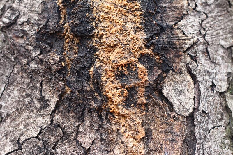 Textured tree bark with deep cracks.  stock images