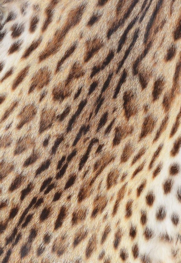 Textured tygrys obrzuca obrazy royalty free
