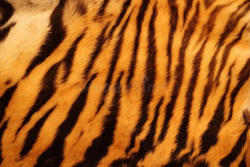 Textured tygrysi futerko obraz stock