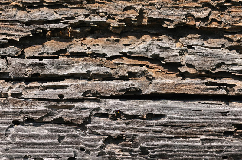 Download Textured wood stock image. Image of timber, aged, rustic - 15316331