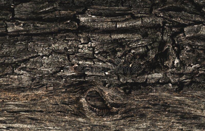Texturen av det gamla ruttna tr?det med sk?llsprickor och oriktigheter Volymtapeter royaltyfri fotografi