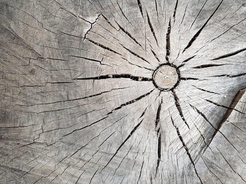 Texturen av det gamla trädet i tvärsnitt som m?jlig textur f?r bakgrundsbrown som anv?nder tr? arkivfoton