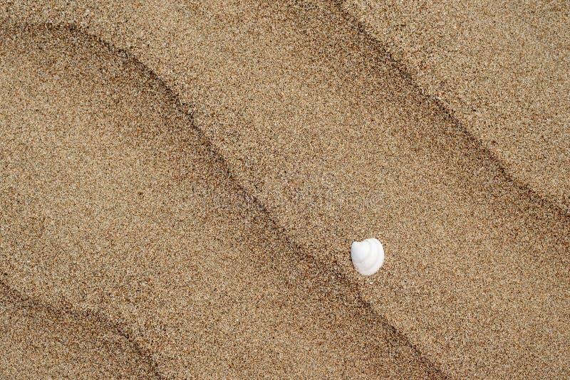 Texturen av en sandig strand med ett vitt skal och strimmor av havet vinkar arkivfoto