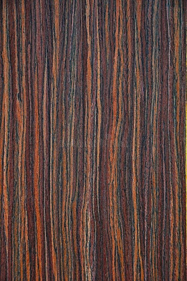 Texturen av ett exotiskt träd Bakgrundsträt royaltyfri bild