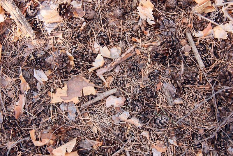 Texturen av jorden i barrskogen royaltyfri fotografi